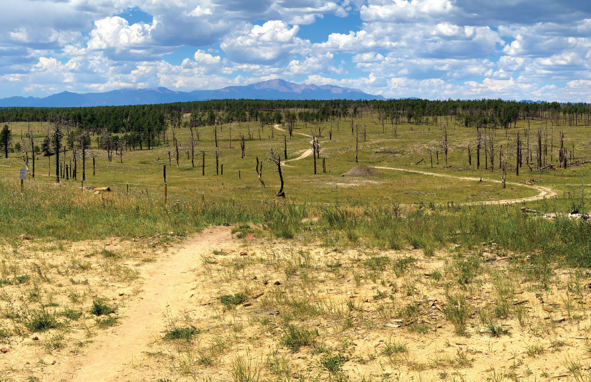 Pineries Open Space Trail View