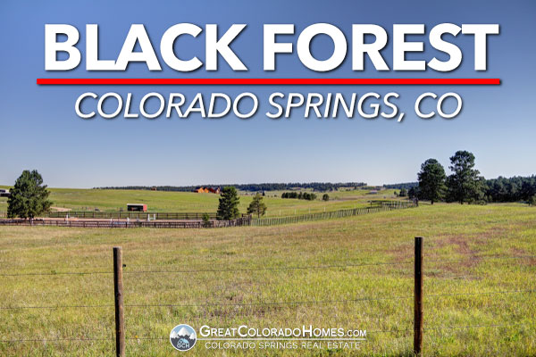 Black Forest in Colorado Springs, CO