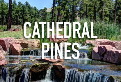 Cathedral Pines
